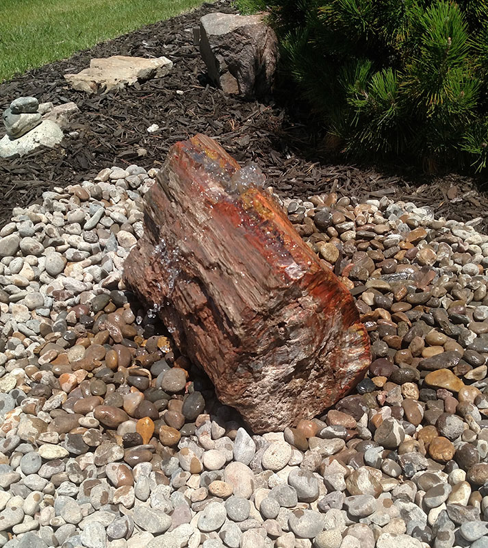 Petrified Wood 3