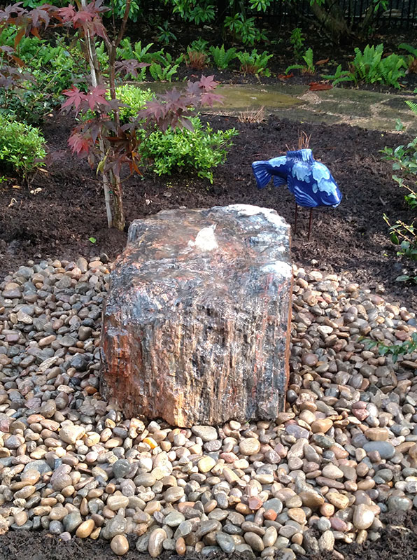 Petrified Wood 5