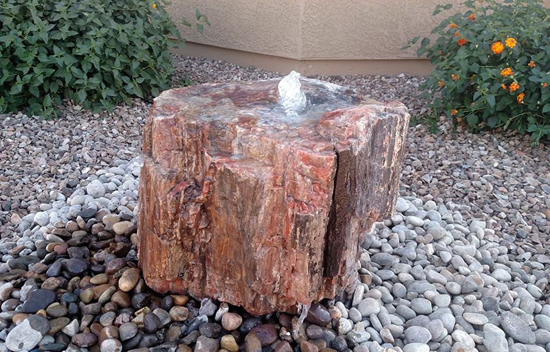 Petrified Wood 6B
