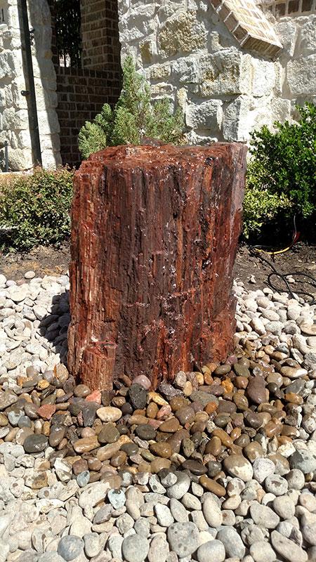 Petrified Wood 8