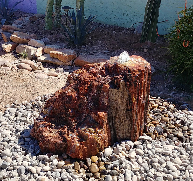Petrified Wood 9