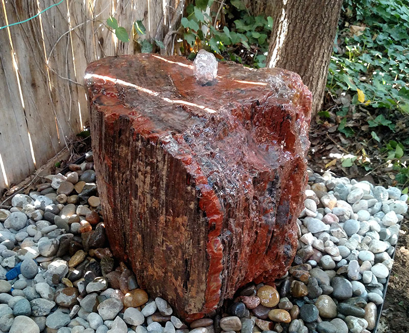 Petrified Wood 12