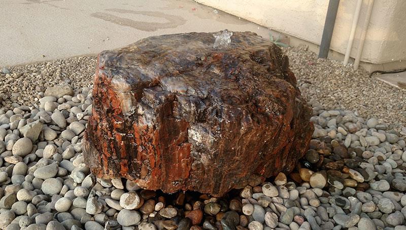 Petrified Wood 14