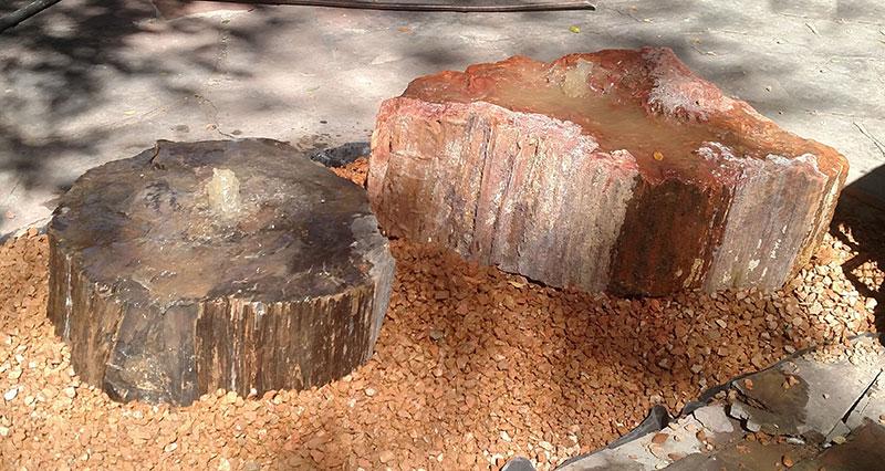 Petrified Wood 17 Set