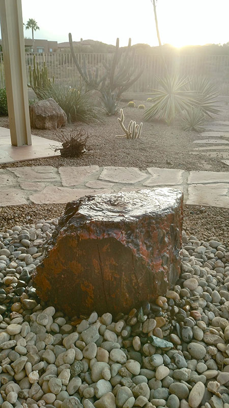 42.-Backyard-petrified-Wood