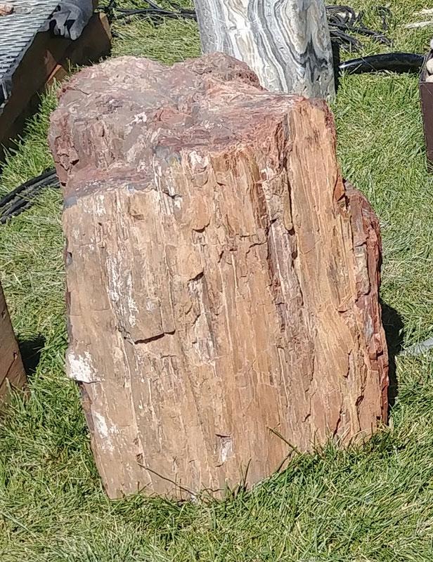 6. Red Petrified Wood
