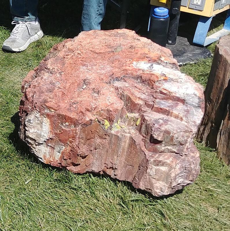 8. Red Petrified Wood