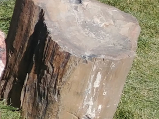 9. Black petrified Wood
