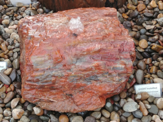 4. Red petrified Wood